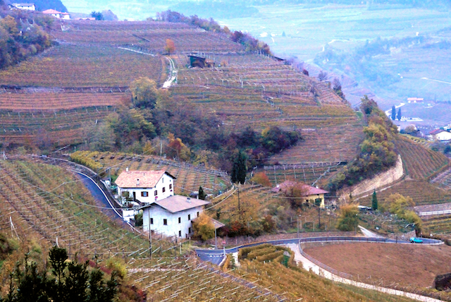 Cembra Valley and its terraced vineyards